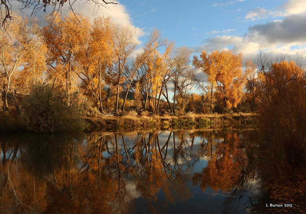 FALL FOLIAGE AT CARSON RIVER - Carson City Fall Activites