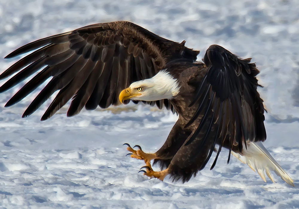 EAGLES AND AGRICULTURE ANNUAL CELEBRATION - Carson Valley Winter Activities