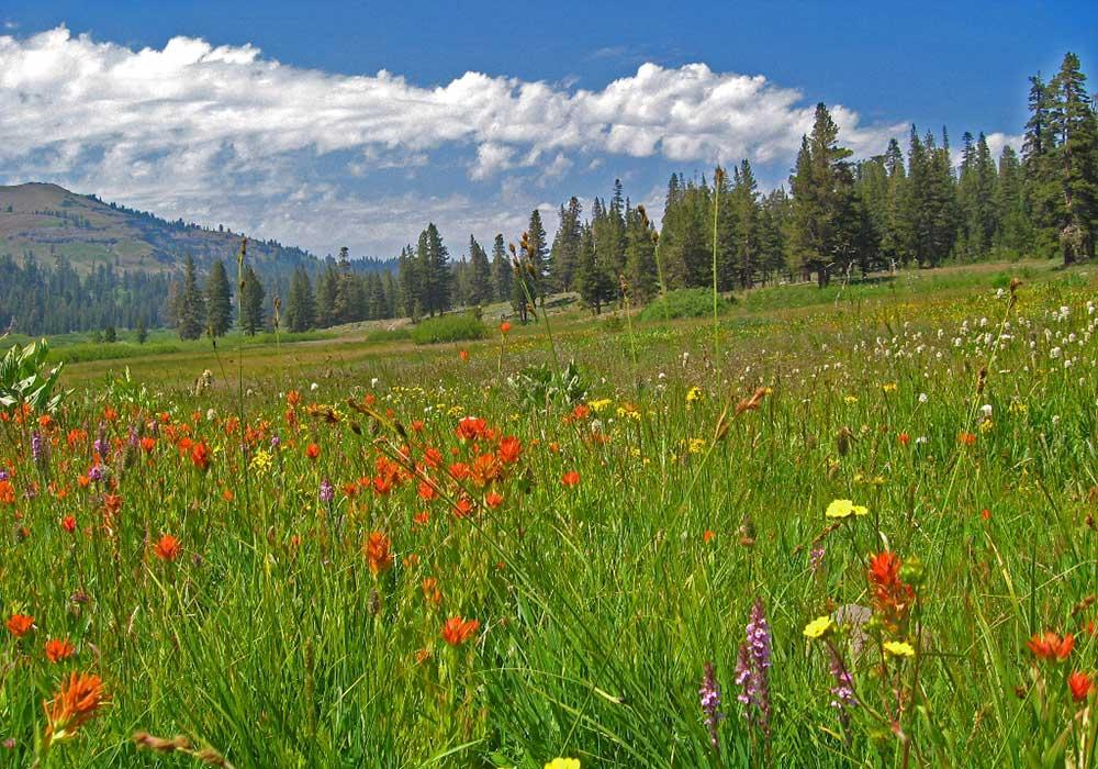 SPRING FLOWERS NEAR RENO, NEVADA - Spring Activites